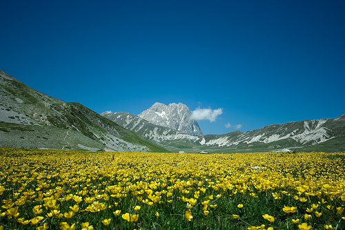 Yellow flowers at Campo Imperatore-1