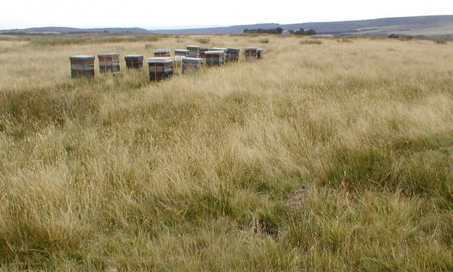 Beehives, On the Farm Track to Ankness - geograph.org.uk - 216047