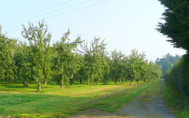 Cider orchards east of Hereford 2 - geograph.org.uk - 899483