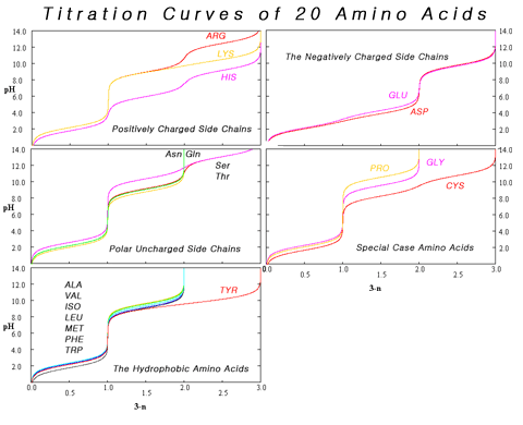 Amino Acid Titration Curves By Side Chain