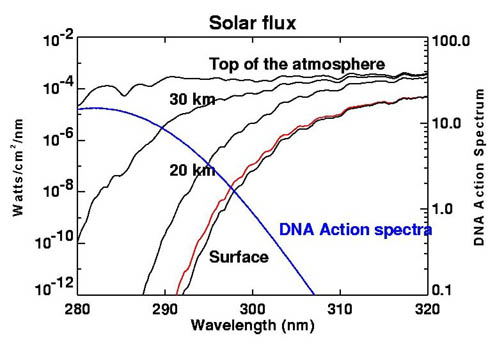 Ozone solar UV absorb DNA action