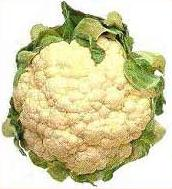 Cauliflower, cultivar unknown