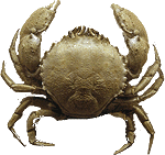Crustacea Facts for Kids