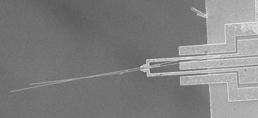 Microgripper holding silicon nanowires