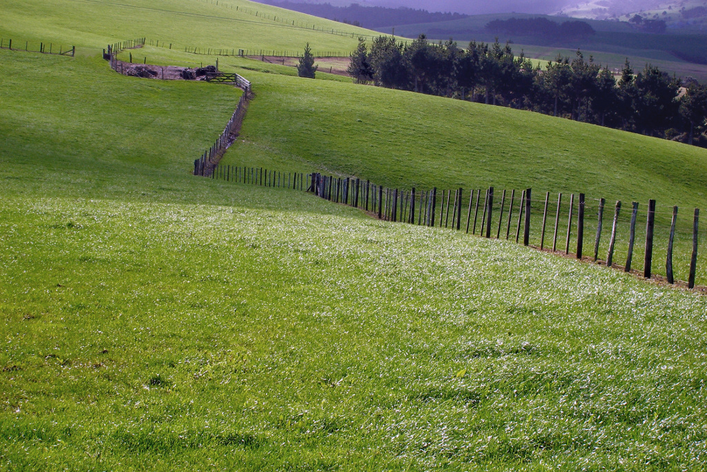 A231, Northland, New Zealand, fence on sheep farm, 2007