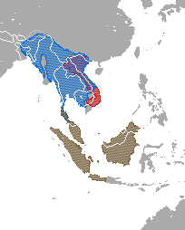 Range map showing ranges of several  species: the Sunda slow loris complex (N. coucang) in Thailand, Malaysia, and Indonesia; the Bengal slow loris (N. bengalensis) in east India, China, Bangladesh, Bhutan, Burma, Thailand, Laos, Vietnam, and Cambodia; and the pygmy slow loris (N. pygmaeus) in Vietnam and Laos.