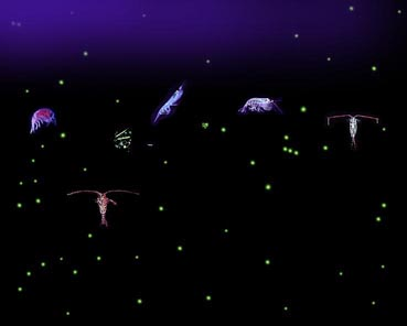Six relatively large variously-shaped organisms with dozens of small light-colored dots all against a dark background. Some of the organisms have antennae that are longer than their bodies.