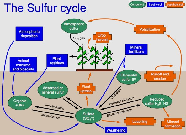 Sulfur Cycle Facts For Kids