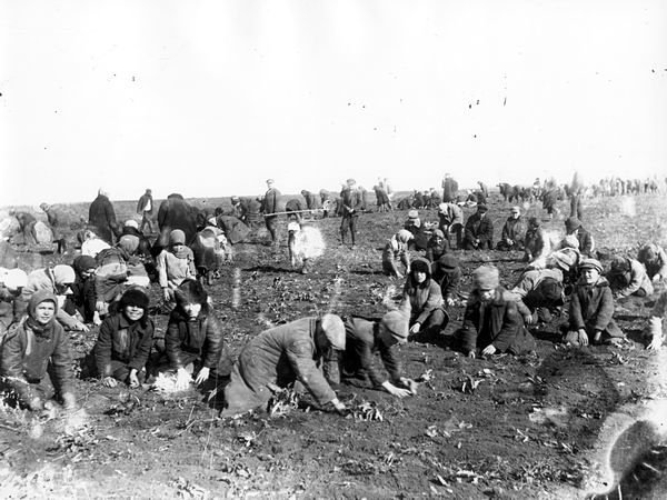 Children are digging up frozen potatoes in the field of a collective farm. Udachne village, Donec'k oblast. 1933