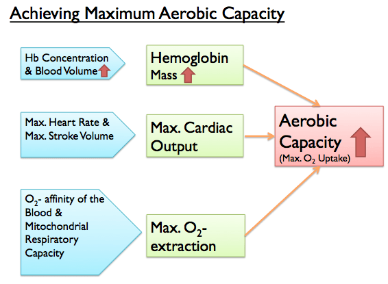 Achieving Maximum Aerobic Capacity