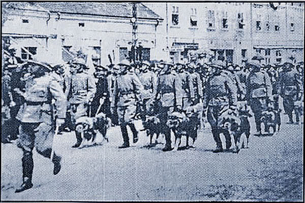 Service dogs of Royal Yugoslav Army