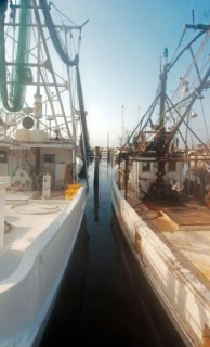 Fishing Fleet in Biloxi
