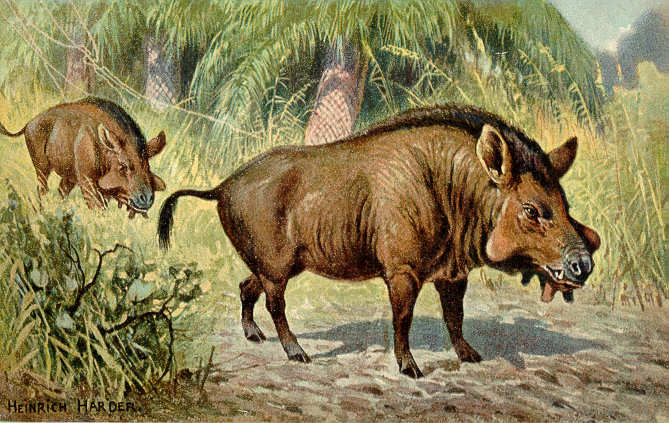 Two large boar-like creatures graze.