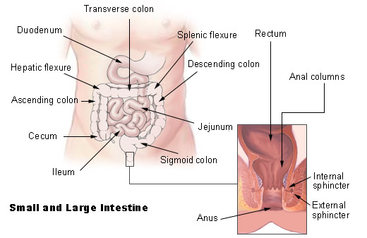 Illu intestine