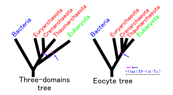 Eocyte hypothesis