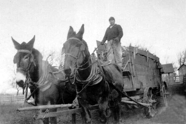 Marion Cty, Iowa Farmer w mule drawn wagon, 1920s