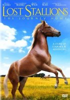 Lost Stallions- The Journey Home.jpg