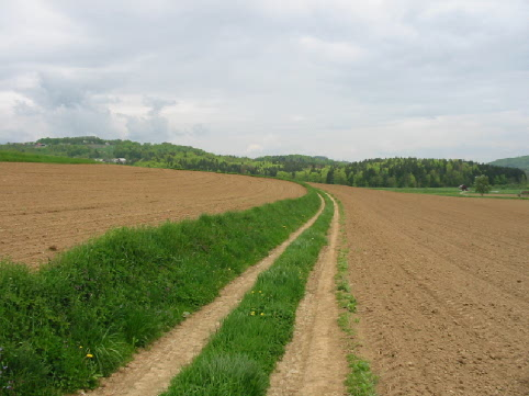 Trail between two fields (Slovenia, Selo pri Mirni)