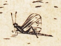 Insect in Dürer's Holy Family with the Mayfly detail
