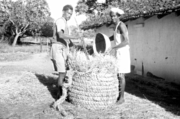Storing rice, India, 1956 (16795758519)