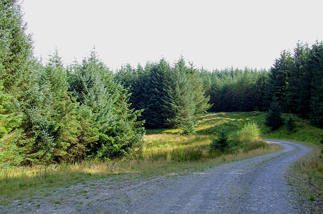 Tywi Forest road, Ceredigion - geograph.org.uk - 1510647