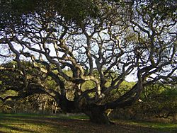 LiveOakLiveOak
