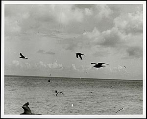 Birds in flight in foreground. Antenna supports for LORAN tower on Sand-Johnston Island in background, 1963. (10055191434)