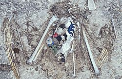 Laysan albatross chick remains