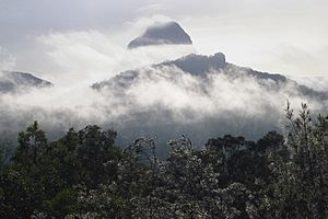 A172, Glass House Mountains National Park, Queensland, Australia, 2007