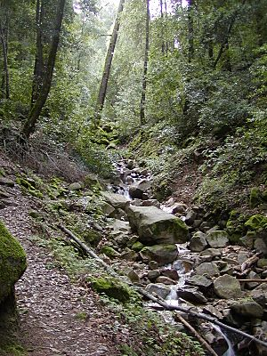 Swanson Creek, Uvas Canyon County Park.jpg