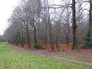 Swinley Park and Brick Pits (5).jpg