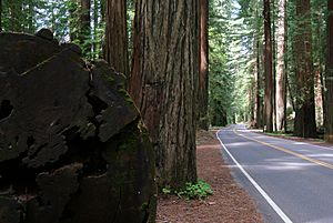 CA 254 Avenue of the Giants