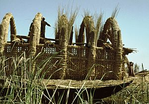 Reed house under construction, Iraq marshes 1978 - panoramio