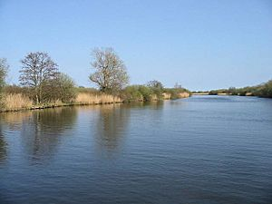 View along the River Bure near Ranworth Dam - geograph.org.uk - 402624.jpg