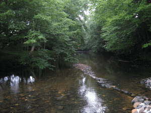 Stream in Linville
