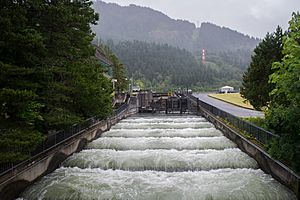 Fish Ladder, Bonneville Dam-2