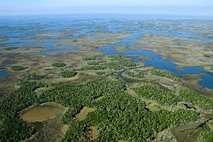 Aerial of Chassahowitzka National Wildife Refuge (7597338986)