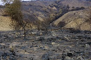 FEMA - 33516 - burned vegetation in California
