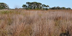 Aransas National Wildlife Refuge, Aransas County, Texas, USA (27 November 2011)