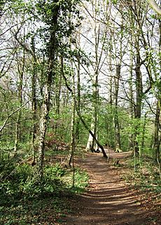 Path through the woods - geograph.org.uk - 1274916
