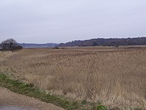 Hook with Warsash Nature Reserve - geograph.org.uk - 1181779.jpg