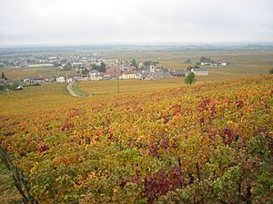 Vignoble Morey Saint Denis