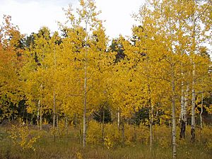 Autumn in the Bighorn Mountains