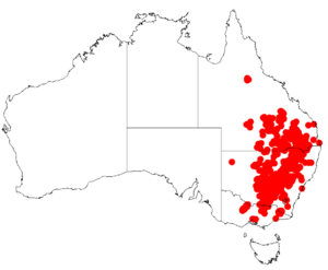 Acacia deanei DistMap.png