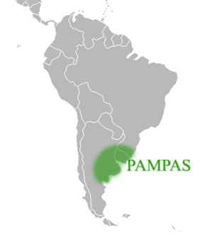 Pampas Facts for Kids