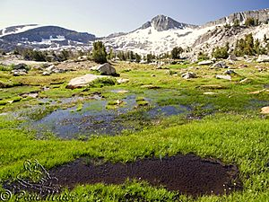 Yosemite toad breeding pool