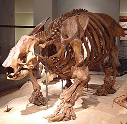 Paramylodon fossil at Texas Memorial Museum