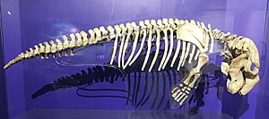 Dugong skeleton displayed at Philippine National Museum