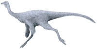 """Ornithomimus"" sp. by Tom Parker.png"