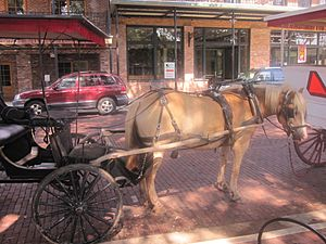 Carriage rides through historic Natchitoches, LA IMG 1977